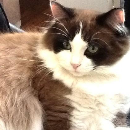 Soft Kitty's Diego